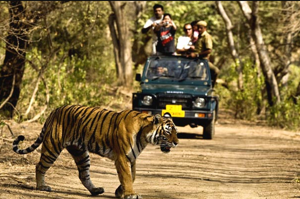 Why you must visit Jim Corbett National Park?